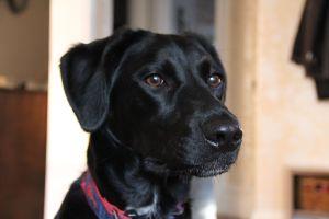 Brody - Winter 2012 - 66