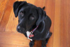 Brody - Winter 2012 - 2744