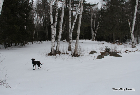 Vermont Winter 2013 002