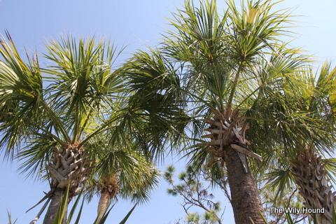 Florida 045